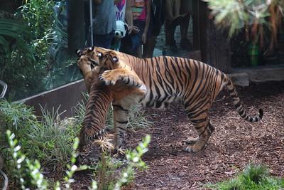 SD Wild Animal Park 2016-07-25