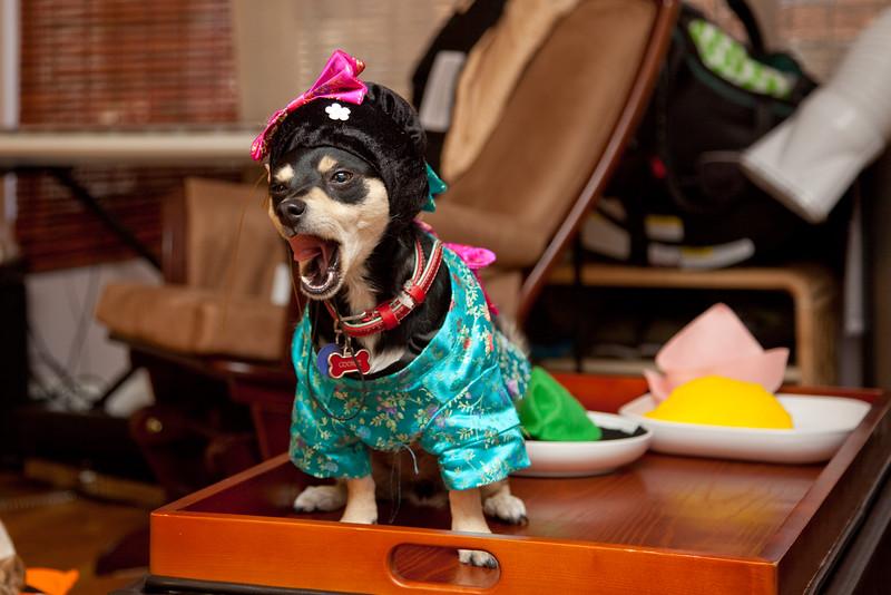 Dog-sushi-halloween-44.jpg