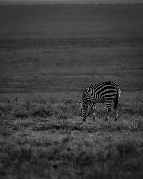 Tanzania_Feb_2018-315.jpg