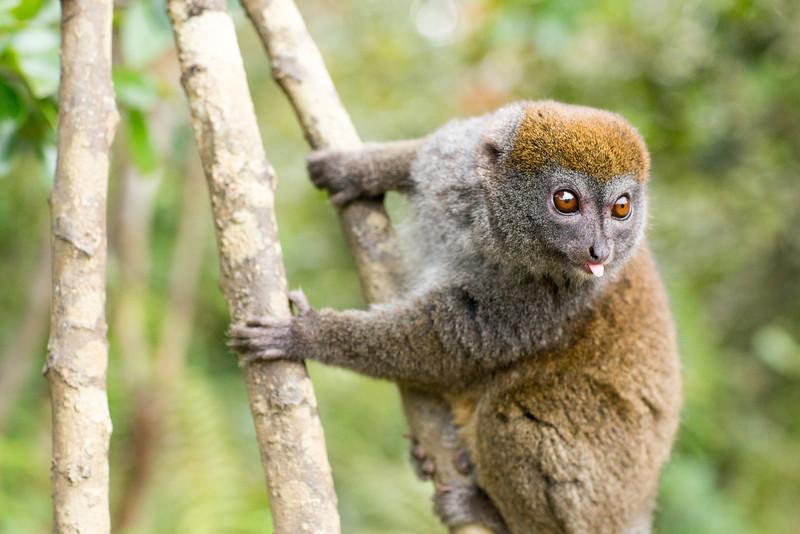 Madagascar_2013_IG3A2458.jpg