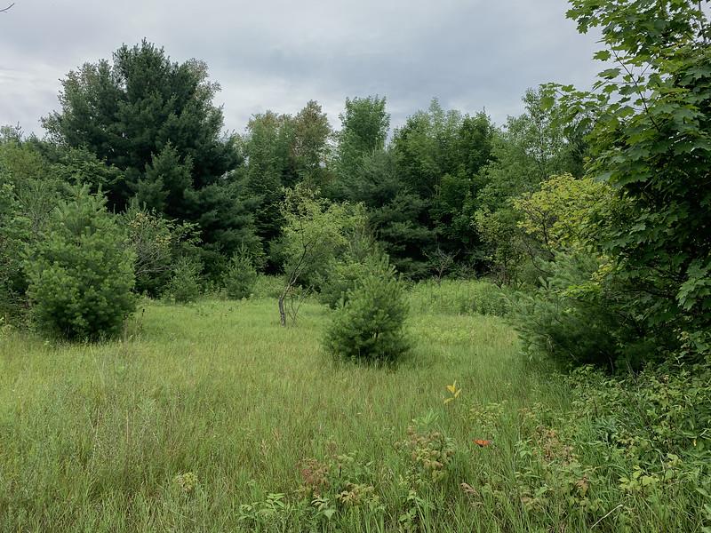 Wesleyville Grasslands , in Area 5 (Photo by Samantha Dunlop)
