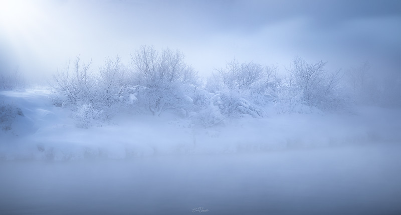 foggytreesfinwebsharp.jpg