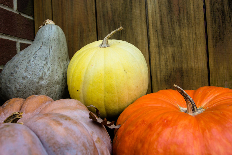Pumpkins and Gourds-1