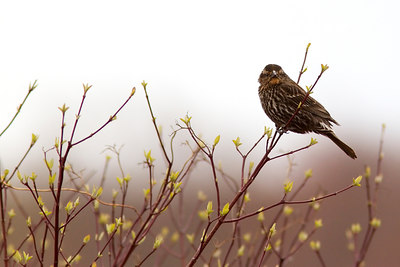 Great Meadows Wildlife refuge (5)