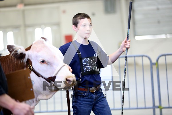 Big East 2014 Youth Steer Ring Shots