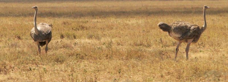 Tanzania - 14.jpg