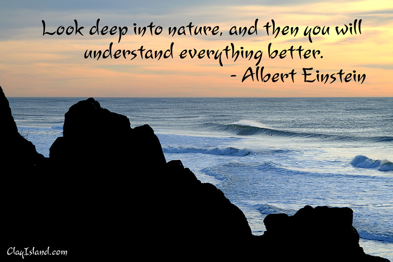 Look-Deep-Into-Nature_5267.jpg