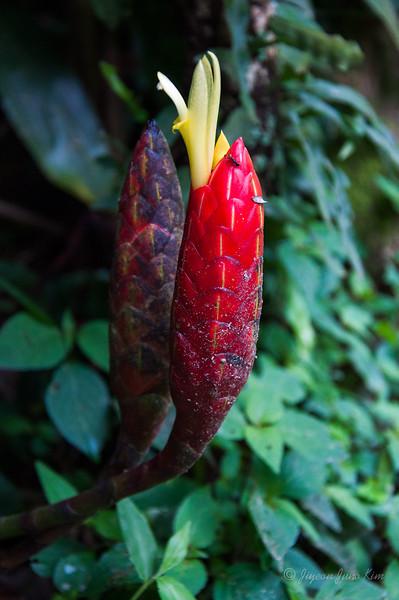 Mexico-Chiapas-Argovia-9137.jpg