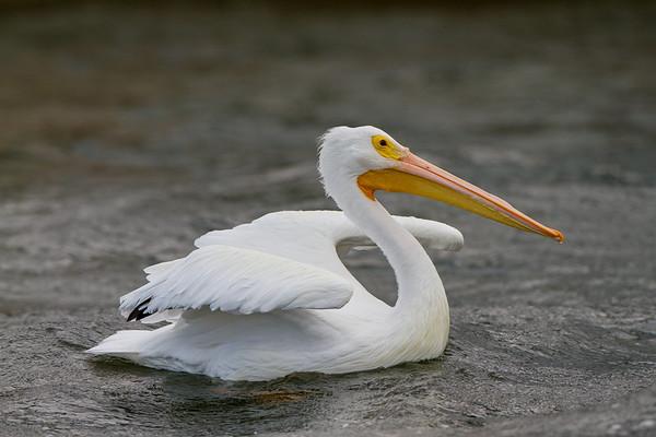 Florida Birds Dec 2012