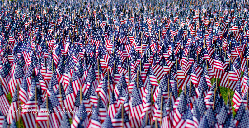 A Sea of Old Glory: I'm still sticking with the Memorial Day theme...The city of Boston planted 33,000 flags on the Boston Common in memory of every fallen Massachusetts soldier from the Civil War to the Present.
