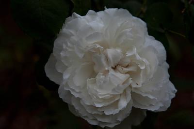 Garden April 15 2012
