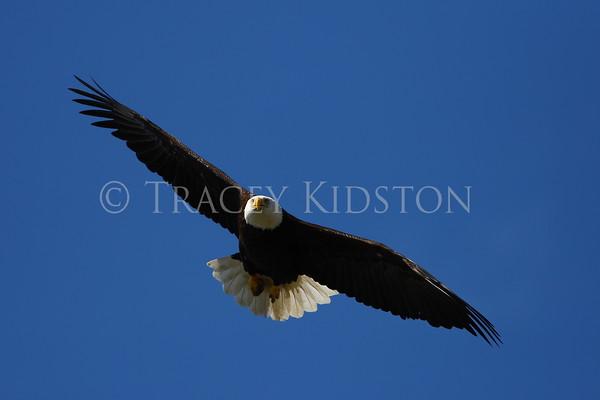 Pacific Northwest Eagles