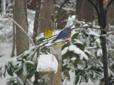 2010-12-26 Old Sugar Bird Feeder Visitors