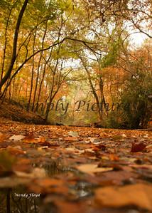 Banita Creek112a