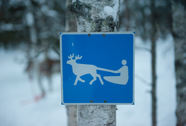 Reindeer Sled Crossing