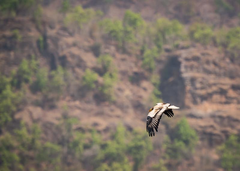 India_April_2019-2971.jpg