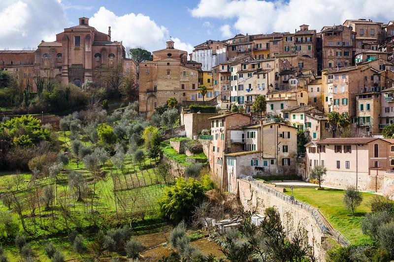 Siena Vineyards