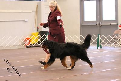 Amateur Owner Handler Dog