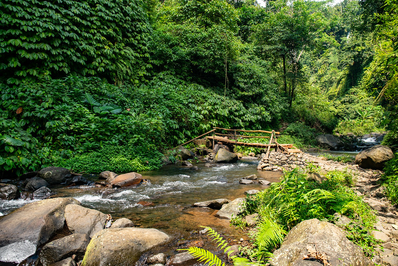Bamboo poles bridge crossing the river rapids in the lush green tropical jungle