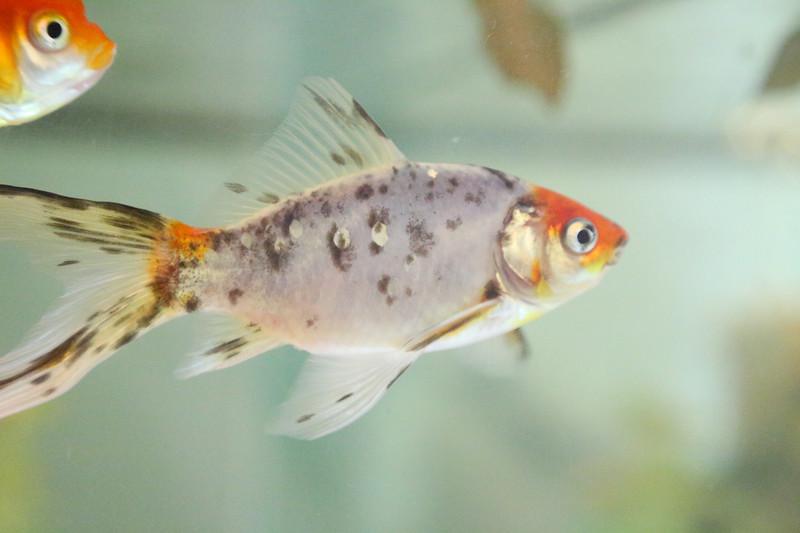 fish6.jpg