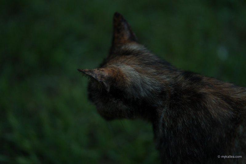 Pets-37.jpg