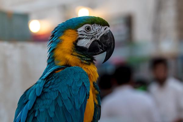Qatar 2018 Doha Bird Market