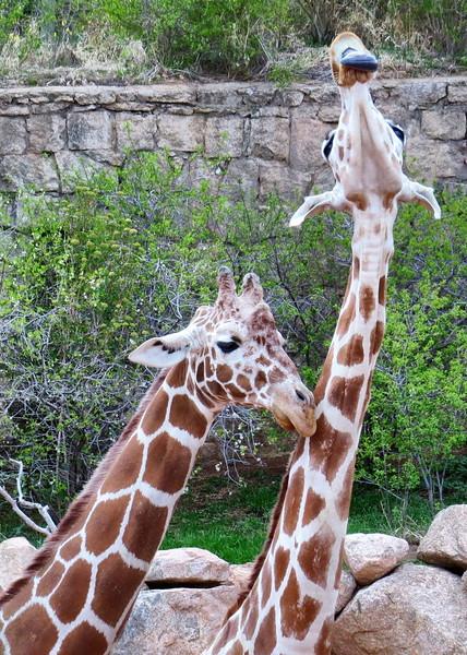 Cheyenne Mtn Zoo (129).jpg