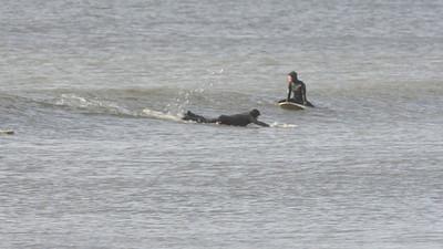 Surfing, Gilgo Beach, NY,  12.24.11 VIDEO