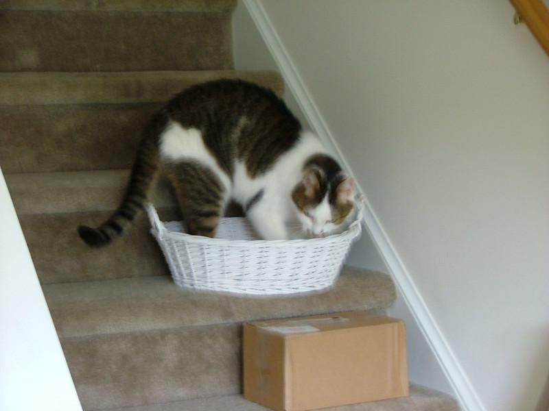 Basket-kneading