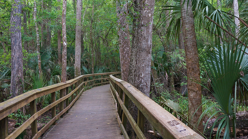 Broad boardwalk in forest
