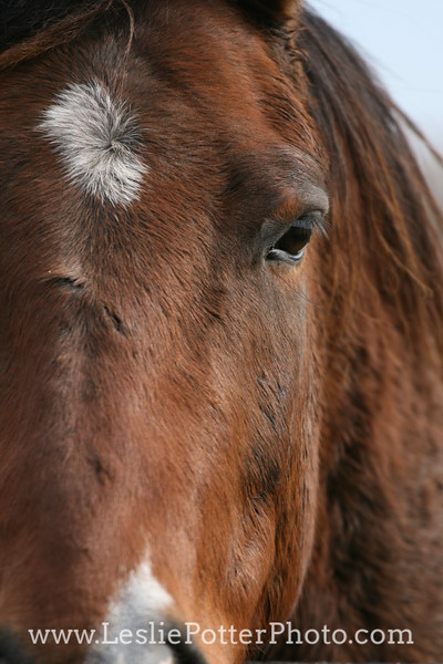 Closeup of Horse Face