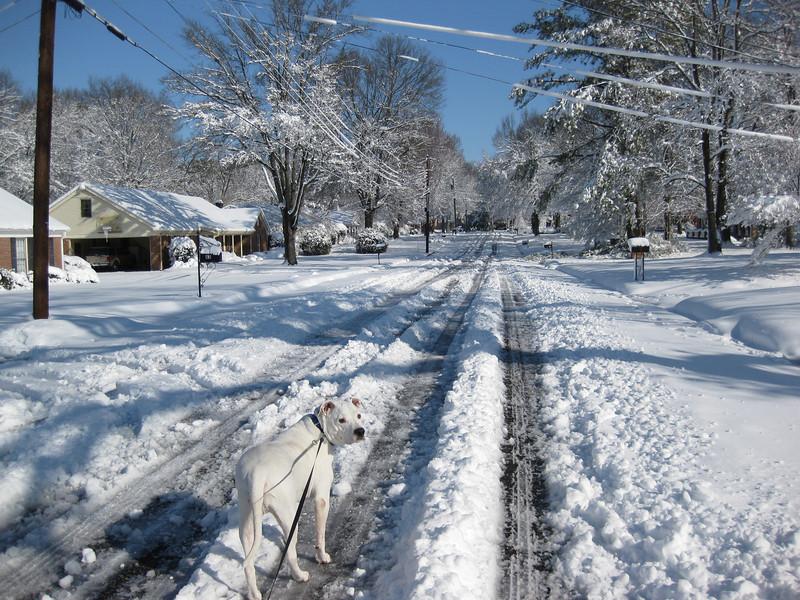 Snow in Jackson_20090301_012.JPG