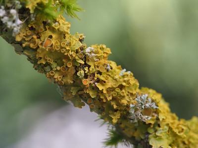Garden - Lichen And Moss