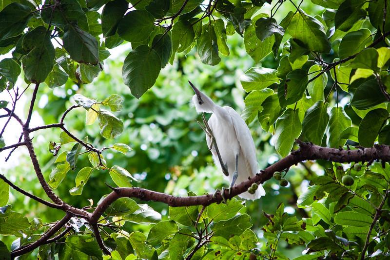 birds-1-2.jpg