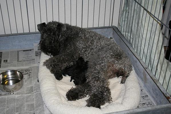 Mia's puppies