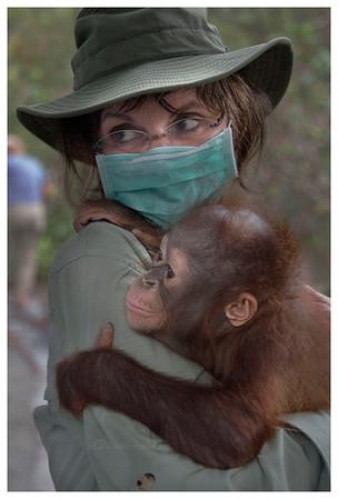 Borneo 2016 - Orangutans +