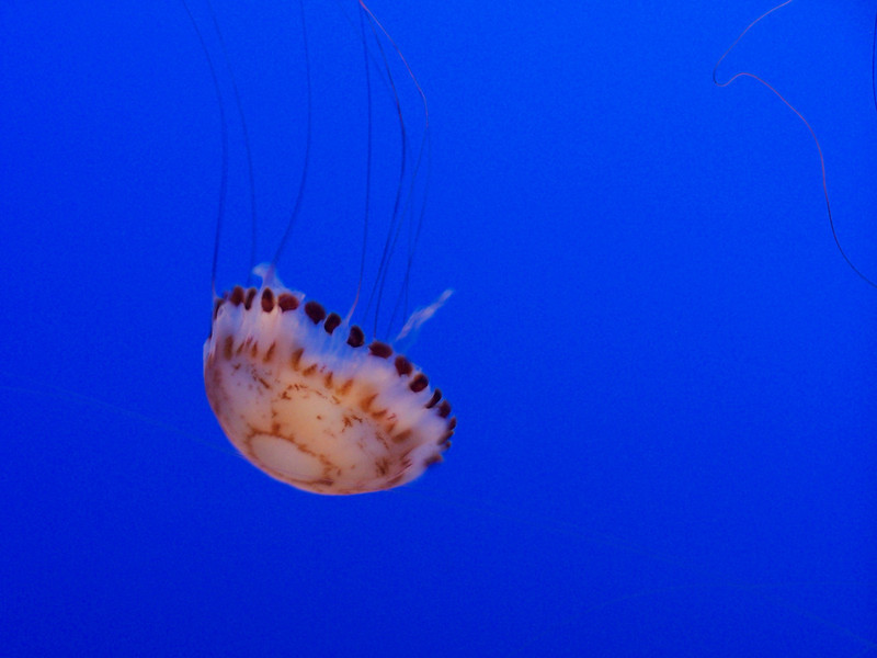 Fascinating slow-motion jellies