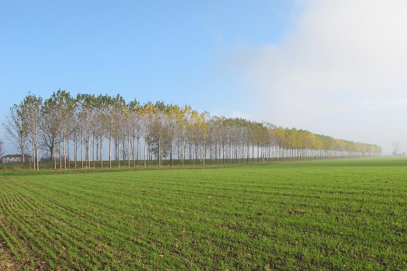 Row of Poplars - Sant'Agata Bolognese, Bologna, Italy - November 10, 2010