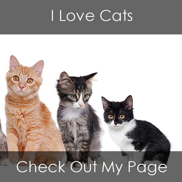 Feature Image - Cats.jpg