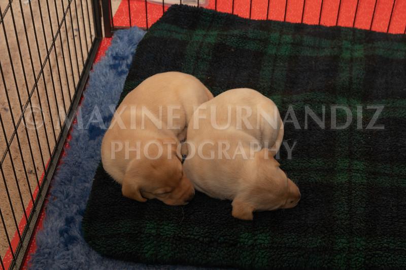 Weika Puppies 2 Mar 2019-8506.jpg