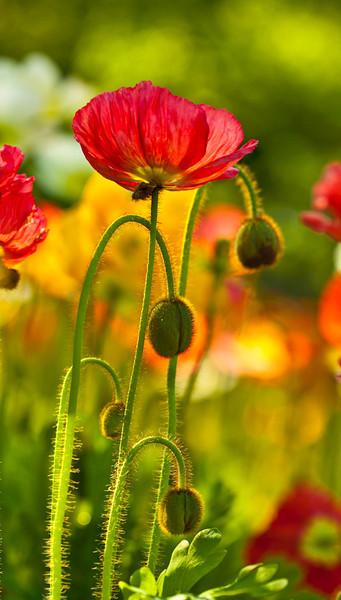 BotanicGarden12-7454-Edit.jpg