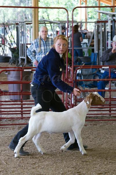 2014 Goat Show