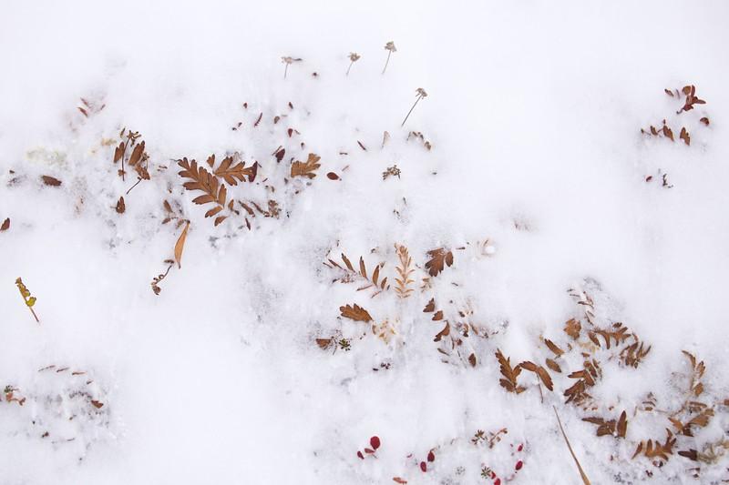 Toolik Snow on the Tundra 1814.jpg