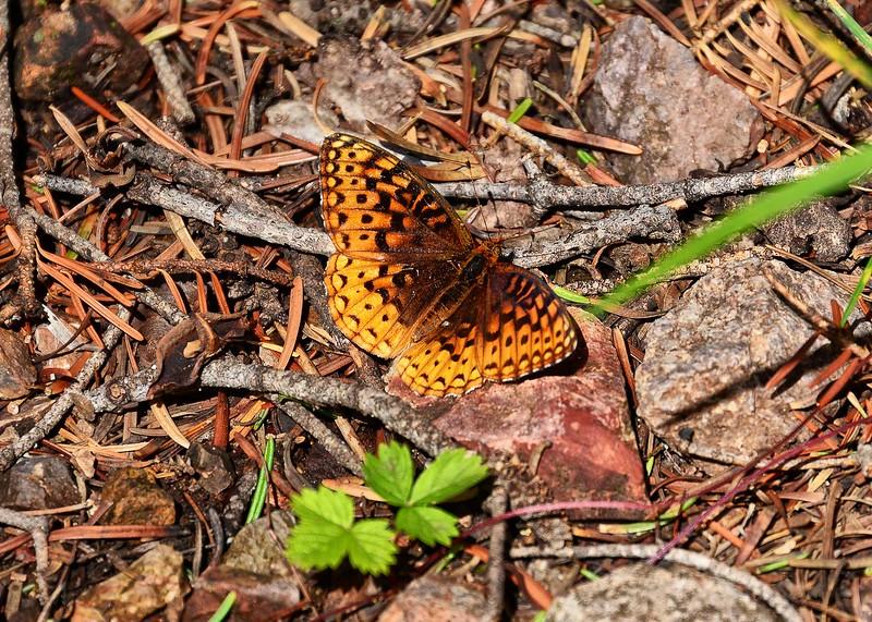 NEA_6932-7x5-Butterfly.jpg