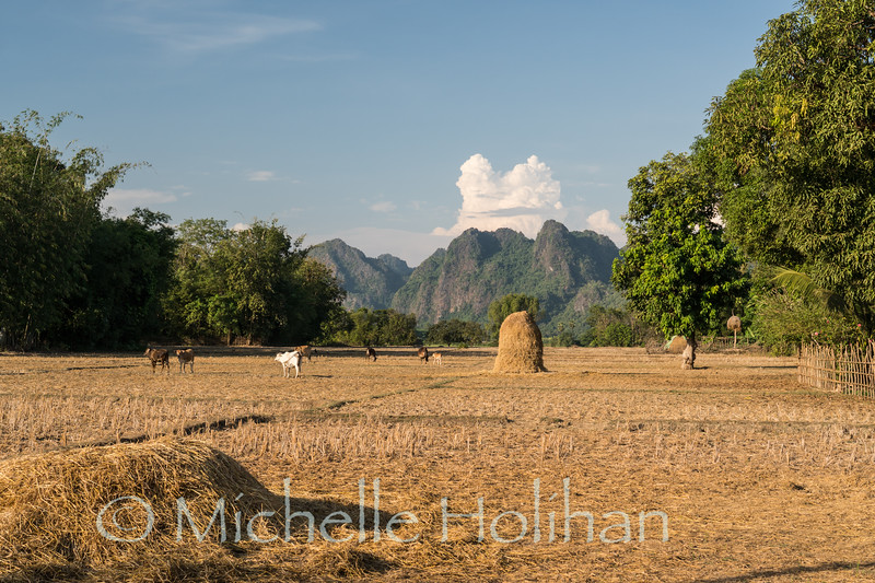 Cows and rice straw in the countryside around Hpa-An, Myanmar