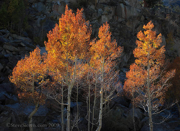 Firery Autumn Bishop Canyon 2009