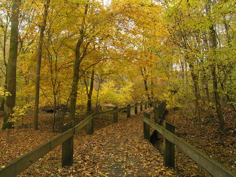 Wooded Pathway, Rock Creek Park, Rockville Maryland - October 2004