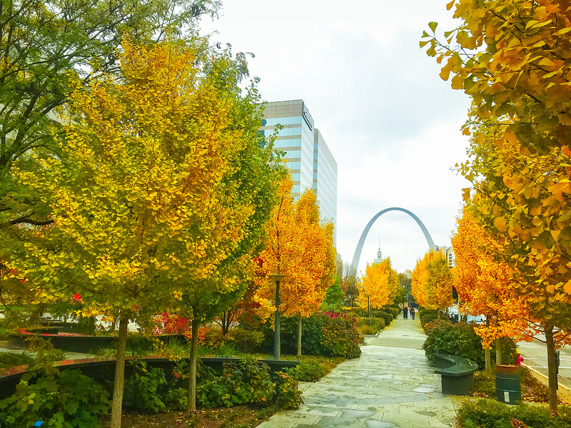 fall foliage in st louis