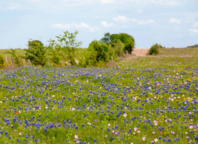 2016_4_9 Texas Wildflower Shoot-8768.jpg