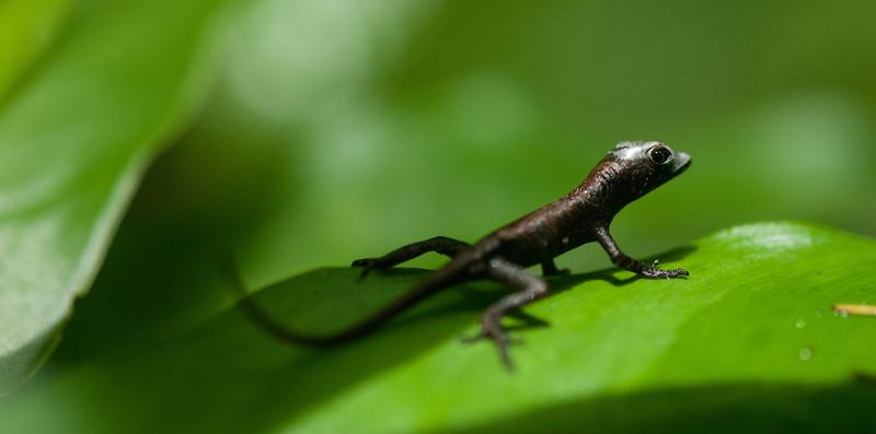 2012-06 Costa Rica-120.jpg